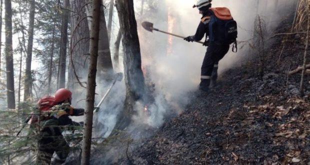 В Симферопольском районе тушили лесной пожар