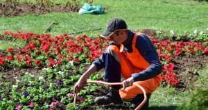В Симферополе высадят более ста тысяч цветов