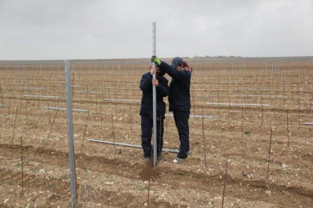 Виноградари Севастополя готовы заложить не менее 200 га виноградников