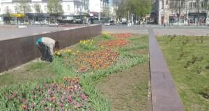 В Симферополе готовятся высаживать цветы