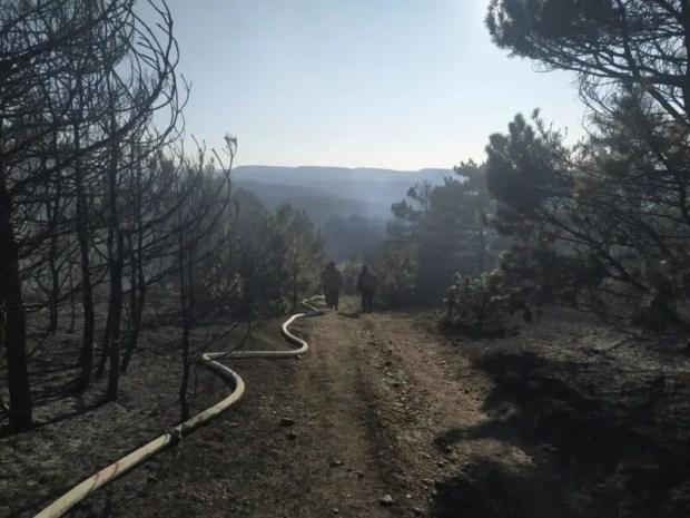 На территории Симферопольского лесничества тушили пожар