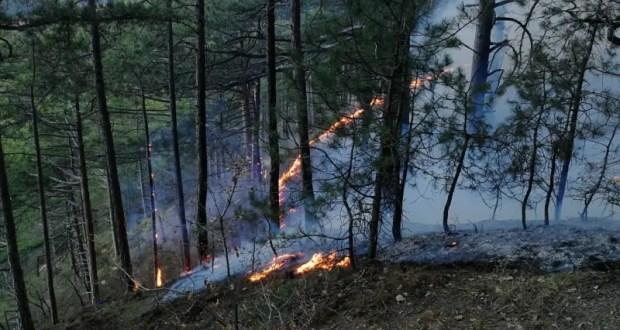 Пожар на южнобережной Боткинской тропе ликвидирован