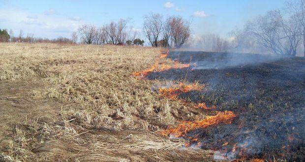 В МЧС Крыма предупреждают: палы травы могут превратиться в крупные пожары