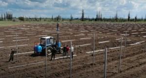 Крымский федеральный университет намерен выращивать высококачественные яблоки и классных специалистов