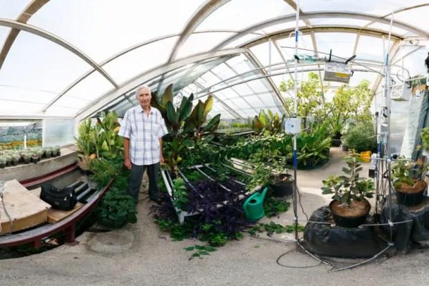 В Никитском ботаническом саду выращивают безвирусные растения. Как? Учёные покажут