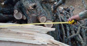 В Бахчисарайском районе Крыма поймали лесоруба-браконьера