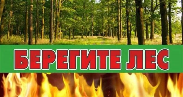 Минприроды Крыма продлевает ограничение пребывания граждан в лесах и въезда в них транспорта