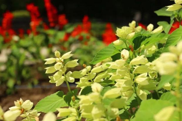 Симферополь украшают цветами
