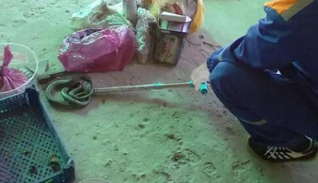 В Крыму змеи все чаще заползают в жилые дома – прячутся от жары