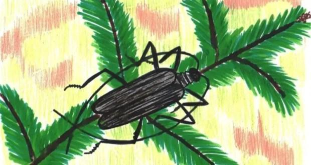Крымская школьница стала призёром Всероссийского конкурса детских рисунков «Лес глазами детей»