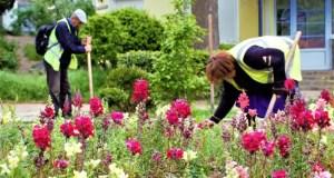 В Ялте хулиганы воруют цветы с клумб