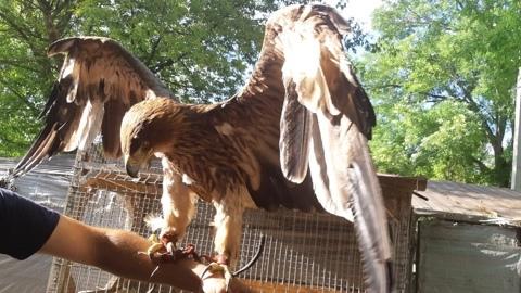 В Судаке у фотографа изъяли краснокнижную птицу