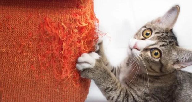 Самые прочные ткани для мебели