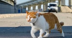 Кот Моста станет… главным в отделе котоновостей