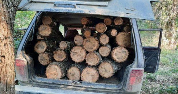 В Белогорском районе задержали лесоруба. Даже сухостой рубить без разрешения нельзя