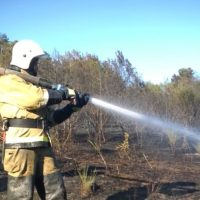Пожар в Бахчисарайском районе - горел лес