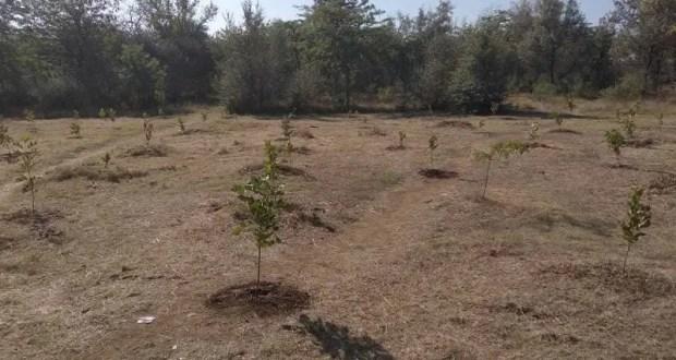 В Сакском районе экологи и волонтеры высадили 300 деревьев