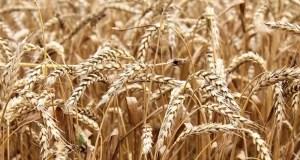 Санкции? Экспорт сельхозпродукции из Крыма в этом году превысит 12 млн. долларов