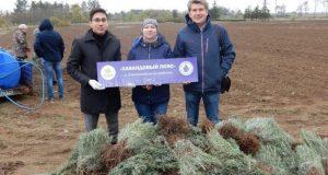 В Джанкойском районе будут высажены 17 тысяч саженцев лаванды