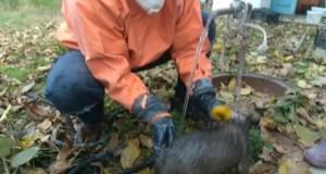 Маленькая спасенная жизнь: сотрудники «КРЫМ-СПАС» оказали помощь собаке, упавшей в яму