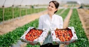 Пять крымских сельхозпроизводителей заслужили статус «Лучшее Предприятие России 2020»