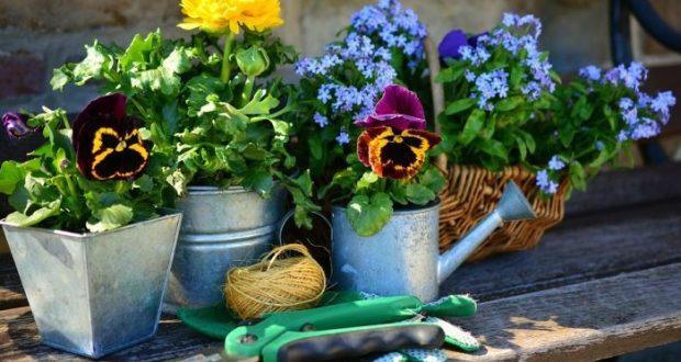 Изменения будут? Что ждет садоводов и дачников в 2021 году