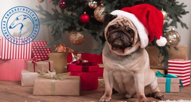 Как сделать новогоднюю ёлку безопасной для собак? Пять советов