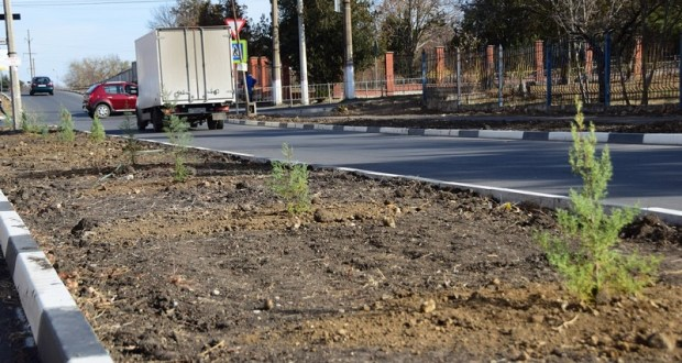 В Симферополе собираются высаживать хвойные кустарники, липы, клёны, рябины, ели, туи смарагды