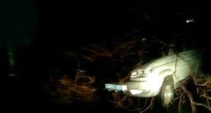 В Евпатории ночью дерево упало на автомобиль