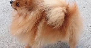 В Сакском районе мужчину осудили за жестокое обращение с животными – живодер убил собачку
