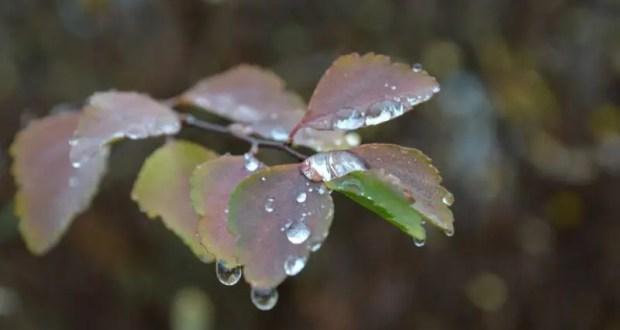 Обещают дожди, но будет тепло. Погода в Крыму