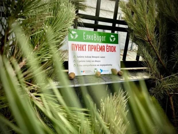 В Крыму подвели итоги экологической акции «ЕлкоВорот»