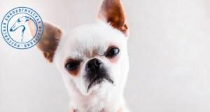 Собака бывает кусачей: каковы причины агрессии четвероногих