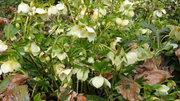 В Никитском ботаническом раскрылись первые раннецветущие тюльпаны