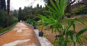 Как проходит восстановление пальмовой аллеи парка-памятника «Алупкинский»