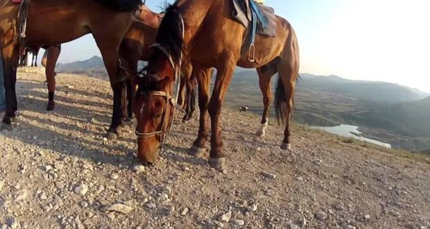 В Севастополе за травму туристки накажут организатора конных прогулок