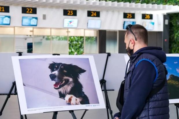 """В аэропорту """"Симферополь"""" презентовали фотовыставку в честь годовщины Крымской весны"""