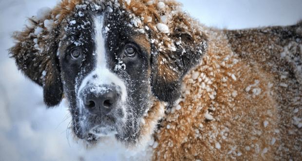 Зима, уходи уже... Погода в Крыму не очень-то весенняя