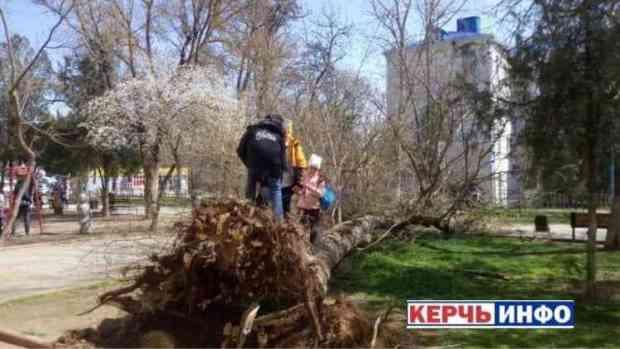 Следком разбирается с происшествием в Керчи: упавшее дерево едва не покалечило женщину с ребенком