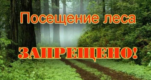 Не самая приятная новость для тех, кто собрался на маёвки: в Крыму – запрет на посещение лесов