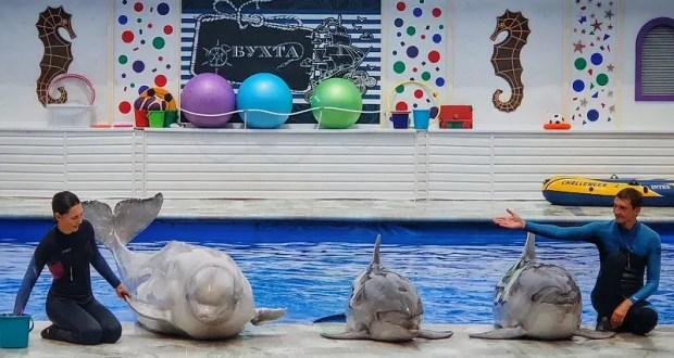 Дельфинария в Артбухте