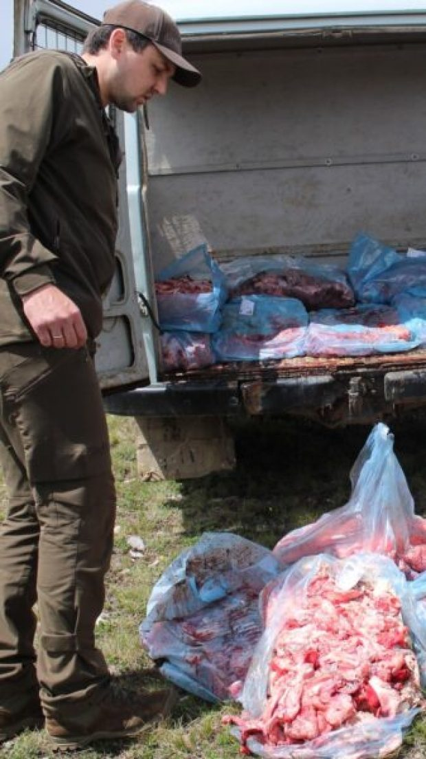 В Крыму кормили краснокнижных черных грифов и белоголовых сипов