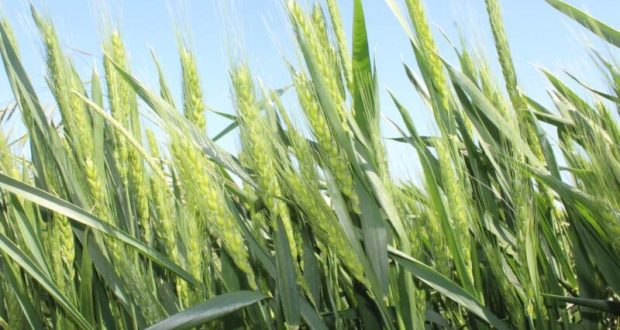 Крымские аграрии заготовили порядка 142 тысяч тонн кормов для сельхозживотных