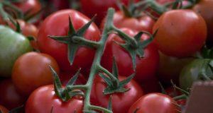 В Крыму рост производства овощей увеличен на 40%