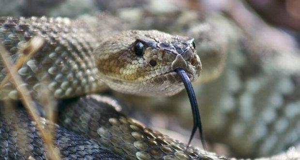 12 июля – Петров день. Змеиный праздник. «Петровские гулянья»