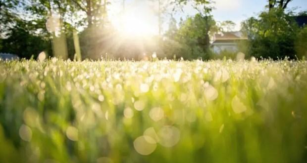 19 июля – день Сысоя Великого. Целебная роса
