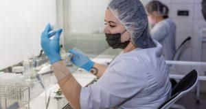 яблочных сортов In vitro
