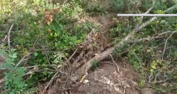 В Бахчисарайском районе полицейские задержали краснодарца, подозреваемого в повреждении лесных насаждений