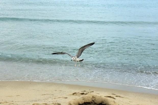 Самые чистые пляжи на Черном море - список (крымские – есть, но не те, о которых вы подумали)