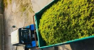Инвестпроект в Коктебеле: виноградники и вино